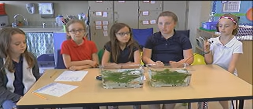 4th graders share their scientific learning.